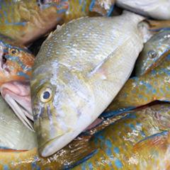 沖縄には魚屋がない?!