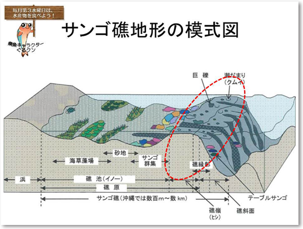 サンゴ礁地形の模式図
