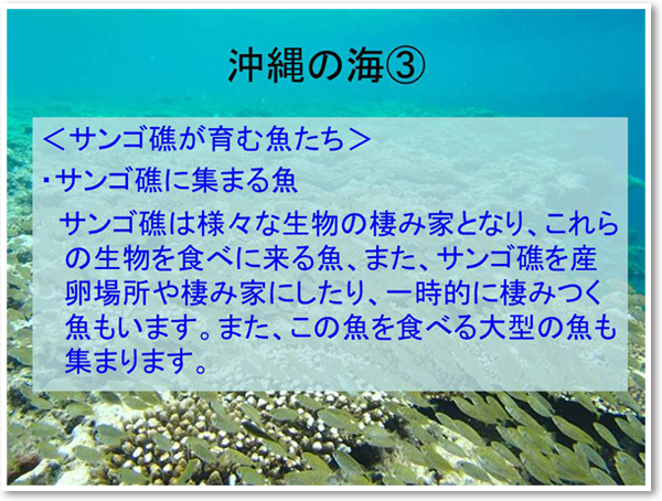 沖縄の海3 <サンゴ礁が育む魚たち>